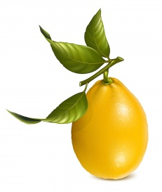 Vectorlib RF (Standard License): Vector. Fresh lemons with leaves.