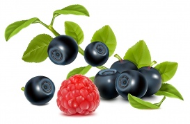 Vectorlib RF (Standard License): Vector. Bilberries with leaves and raspberry.