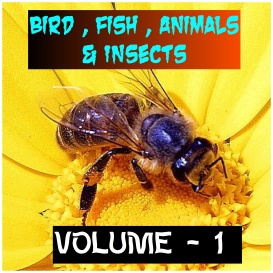 ANIMALS BIRDS AND FISHES - Volume - 1