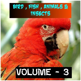 animals birds and fishes - volume - 3