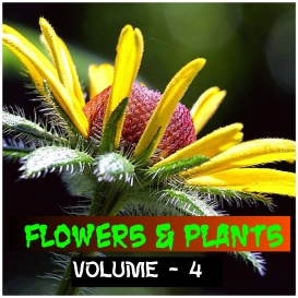 flowers and plants - volume - 4