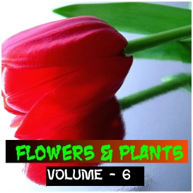 flowers and plants - volume - 6