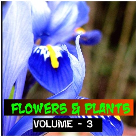 flowers and plants - volume - 3