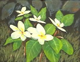 Painting Frangipanis | Movies and Videos | Educational