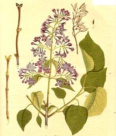 Oswald : Airs for the seasons - Syringa : Violin/Flute | Music | Classical