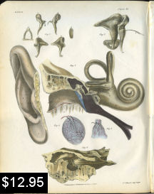 anatomy print of the ear