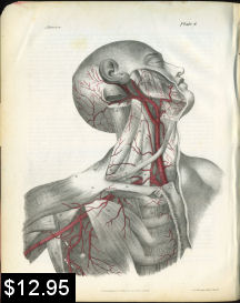 Arteries of the Neck Anatomy Print | Photos and Images | Vintage