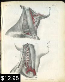 Vertebral Artery Anatomy Print | Photos and Images | Vintage