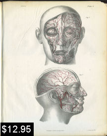 Arteries of the Skull Print | Photos and Images | Vintage