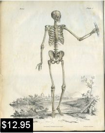 Human Skeleton Anatomy Print | Photos and Images | Vintage