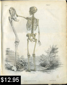 Skeleton Anatomy Print | Photos and Images | Vintage