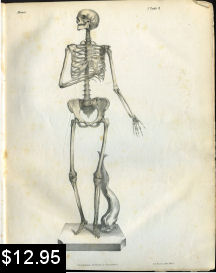 Anatomy print of the Skeleton | Photos and Images | Vintage