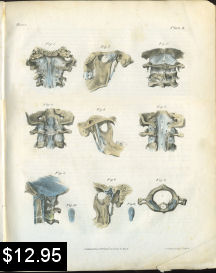TMJ Cervical Spine Anatomy Print | Photos and Images | Vintage