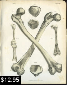 Bones of the Leg Anatomy Print | Photos and Images | Vintage