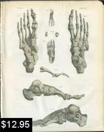 Bones of the Foot Anatomy Print | Photos and Images | Vintage