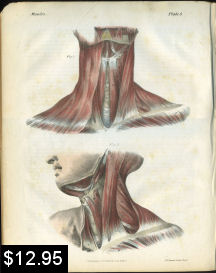 Muscles of the Neck Anatomy Print | Photos and Images | Vintage