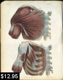 Muscles of the Shoulder Anatomy print | Photos and Images | Vintage