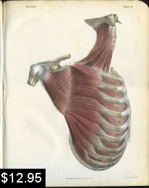 Neck Shoulder Muscles Anatomy Print | Photos and Images | Vintage