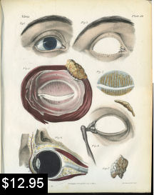 eye anatomy print