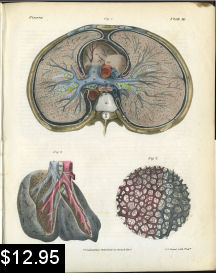 lung anatomy cross section print