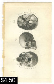 Skull Anatomy Print | Photos and Images | Vintage