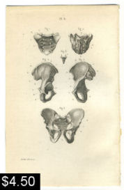 Pelvic Bones Anatomy Print | Photos and Images | Vintage