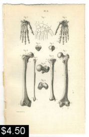 Hand Leg Anatomy Print | Photos and Images | Vintage