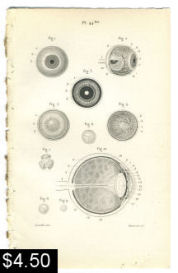 Human Eye Anatomy print | Photos and Images | Vintage