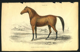 Vintage Horse Print 1838 | Photos and Images | Animals